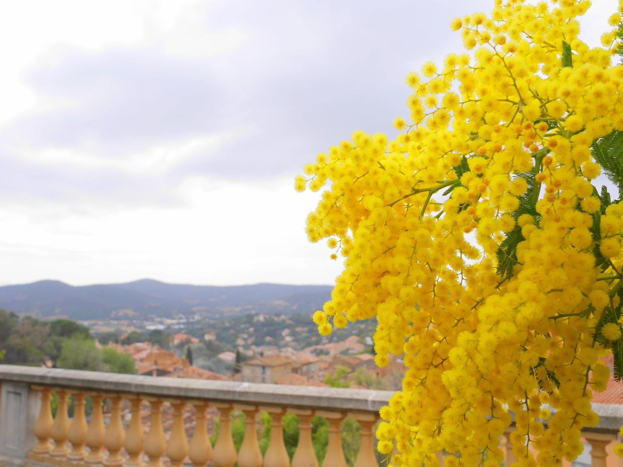 Bormes-les-mimosas